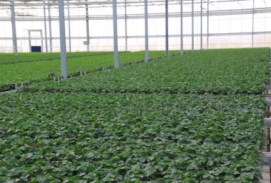 Rohware Beet- und Balkonpflanzen