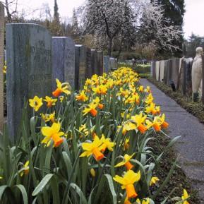 Friedhofsbepflanzungen mit Blumenzwiebeln