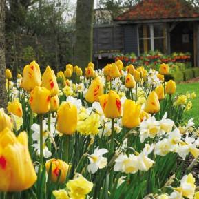 Verwendung von Blumenzwiebeln im Lanschafts- und Gartenbau