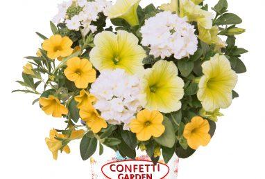 Confetti Garden Sunshine