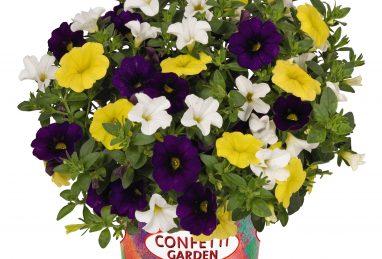 Confetti Garden Nani Hoku Star