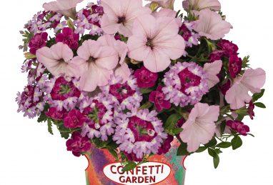 Confetti Garden Vintage Venus