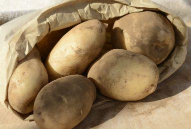 Solanum tuberosum (Kartoffel) Sarpo Shona
