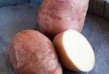 Solanum tuberosum (Kartoffel) Axona