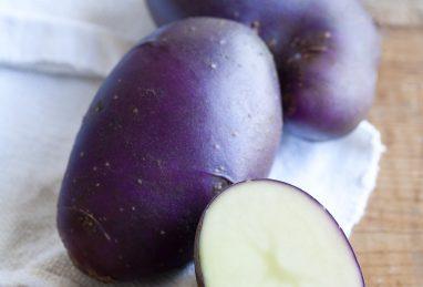 Solanum tuberosum (Kartoffel) Blue Danube