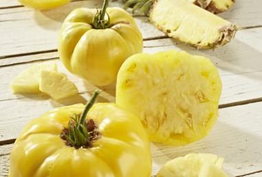 Ananas-Tomate Pinedo F1