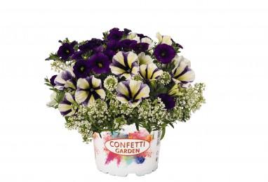 Confetti Garden Glossy Vanilla Muffin