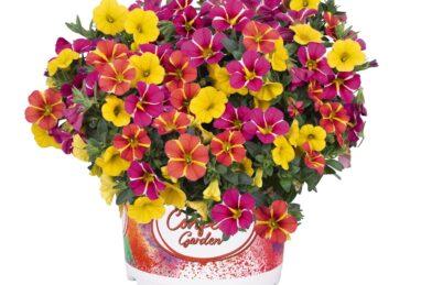 Confetti Garden Hawaiian Cart Wheel