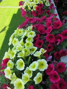 Bepflanzungsbeispiele Beet- und Balkonpflanzen