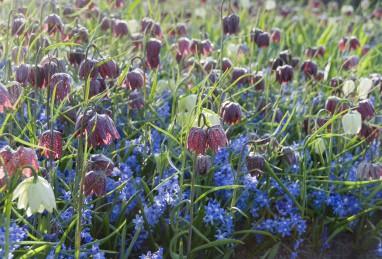 Confetti Natural Garden