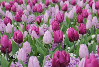 "Mischung ""Frühlingsromantik"" (Confetti Purple Candy)"