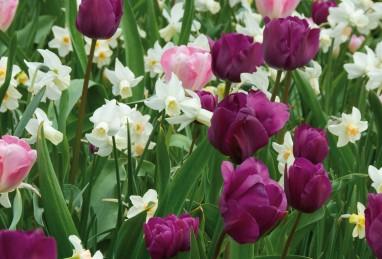"""Mischung """"Träumerei in Rosa, Violett und Weiss"""" (Confetti Romantic Garden)"""