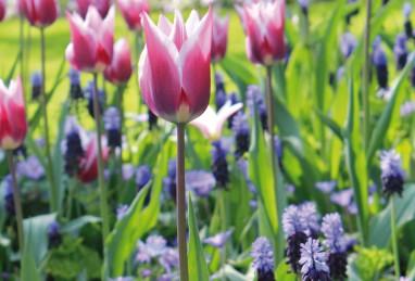 Confetti Violet Blue Border