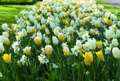 Confetti White Yellow Sensation