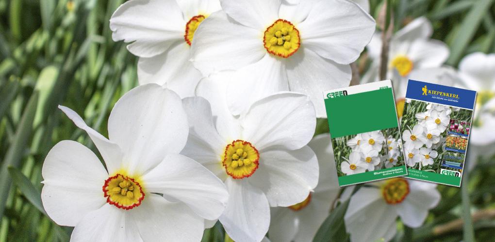 NEU: Blumenzwiebeln-Katalog mit über 80 Seiten