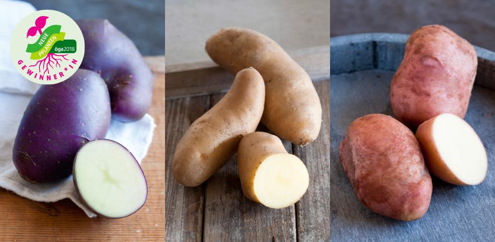 Gewonnen! Kartoffel-Serie Sarpo gewinnt Neuheitenauszeichnung öga 2018