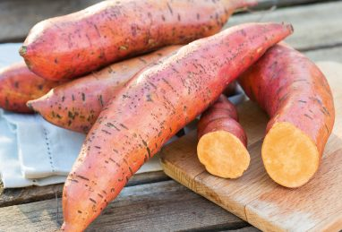 Ipomoea batatas (Süsskartoffel) Erato Deep Orange