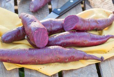 Ipomoea batatas (Süsskartoffel) Erato Violet