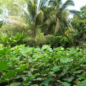 Botanischer Garten Jardin des Parfums et des Epices
