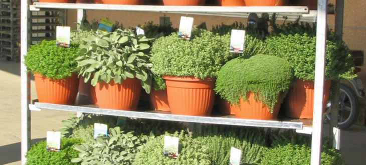 Mediterrane Kräuter und Zierpflanzen