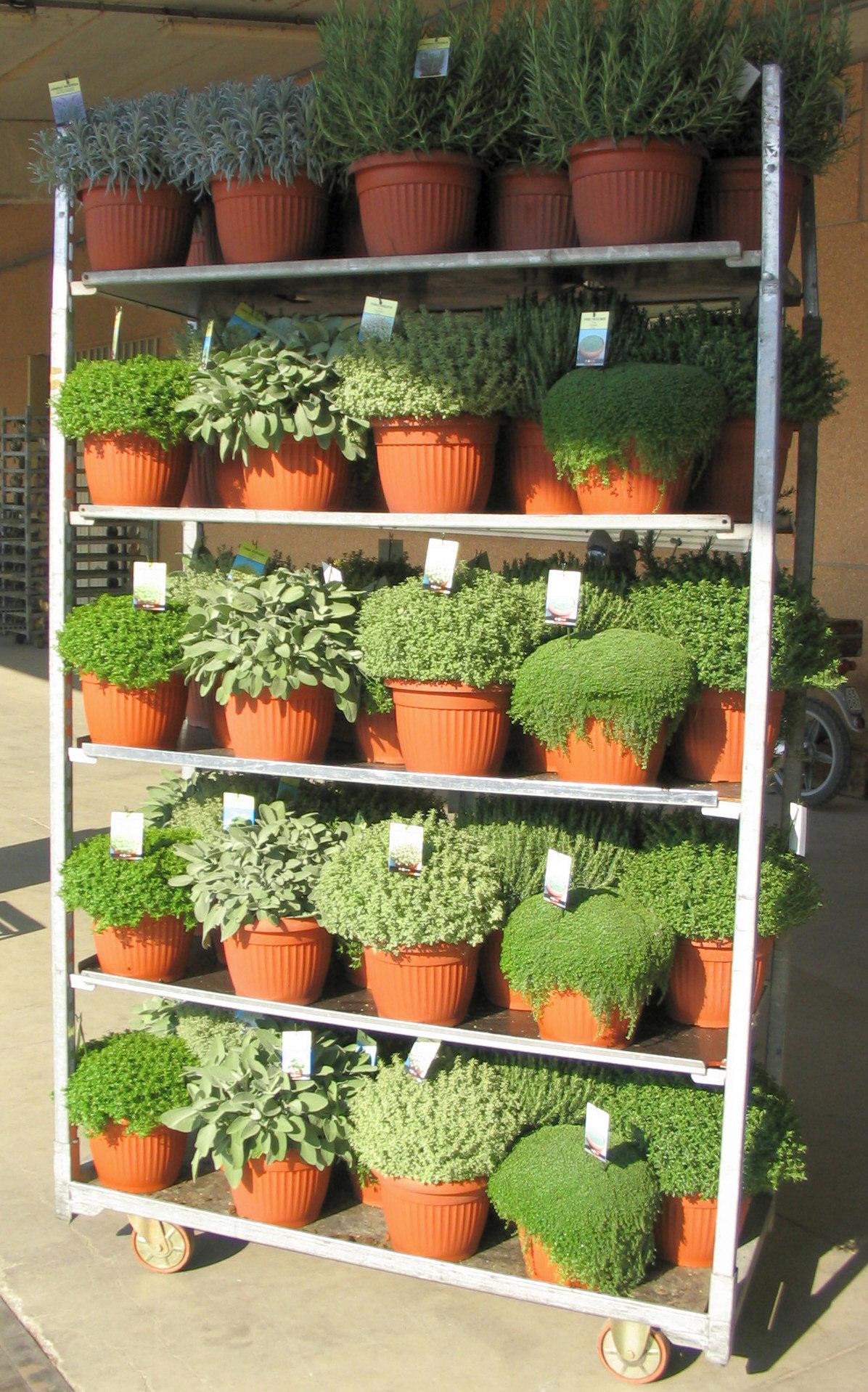 mediterrane pflanzen - green pflanzenhandel gmbh, Gartengerate ideen