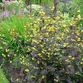 Botanischer Garten Lanhydrock