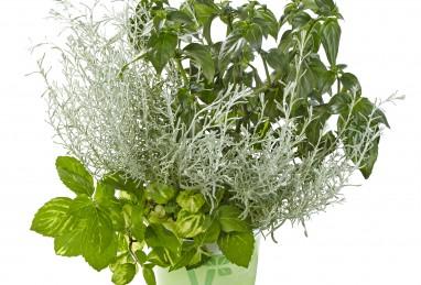Mix a Herb Asia Wok