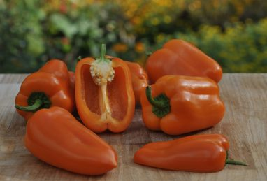 Capsicum annuum Almira Midi Orange F1