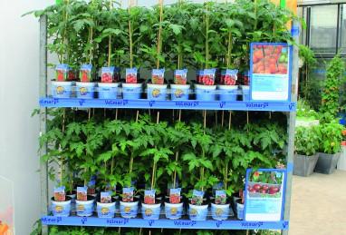 NEU 2015 – Gemüse im V-Plants-Konzepttopf