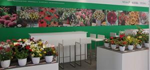 Ausstellungen Galerien