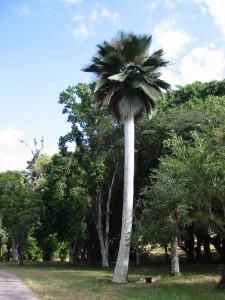Botanischer Garten Jardin Botanico Soledad (Cuba)