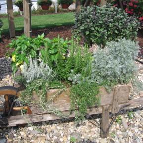 Kombination von Gemüsepflanzen und Kräuter