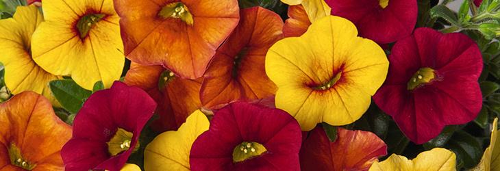 Produkte von GREEN Pflanzenhandel