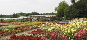 Volmary-Pflanzenzuchtzentrum
